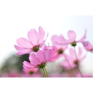 fotomurale fiori selvatici rosa