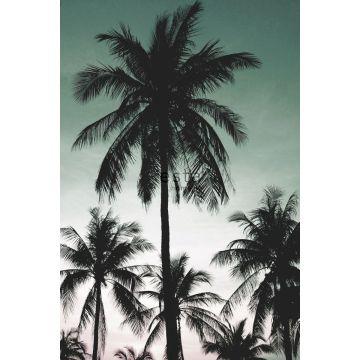 fotomurale palme verde petrolio