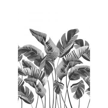 fotomurale grandi foglie di banana bianco e nero