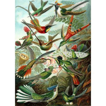 fotomurale uccelli verde giungla tropicale