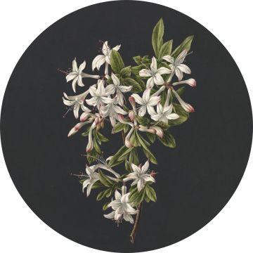 fotomurale autoadhesivo tondo fiori rosa chiaro e nero