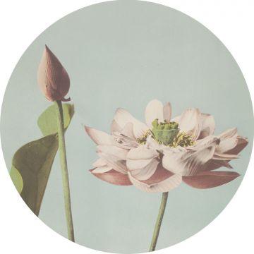 fotomurale autoadhesivo tondo fiore di loto rosa tenue e blu grigrio