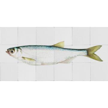 adesivo da parete pesce giallo e blu