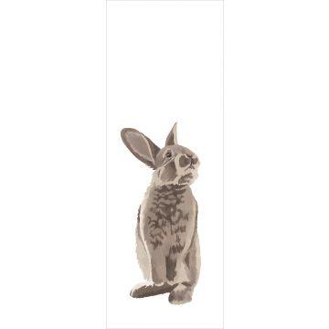 fotomurale coniglio marrone